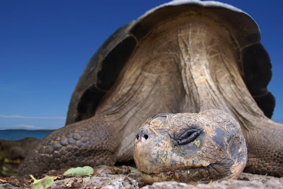 Hotels In Galapagos National Park