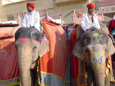 Amber Fort Elephant Ride