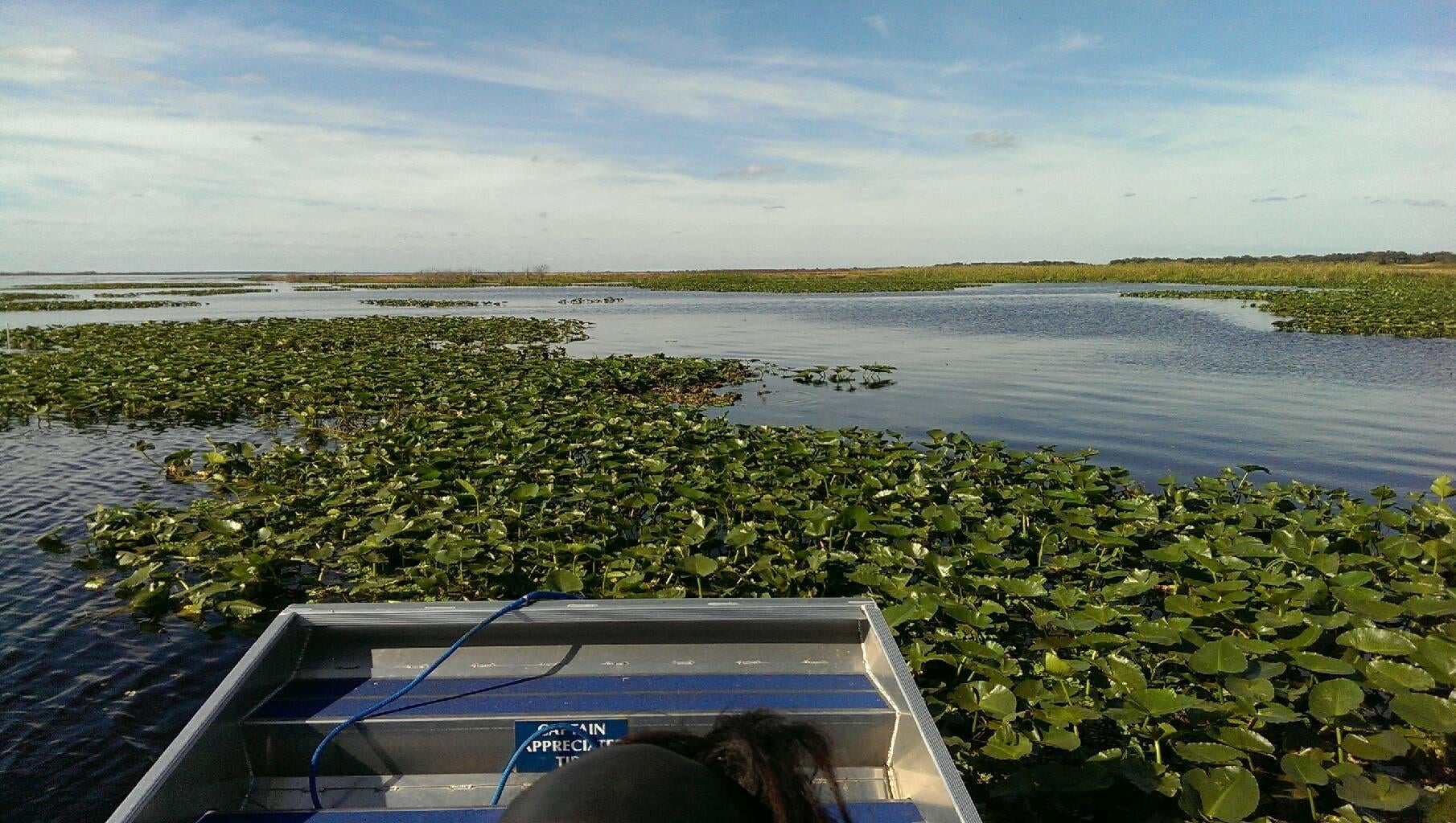 Mar en Kissimmee Swamp Tours