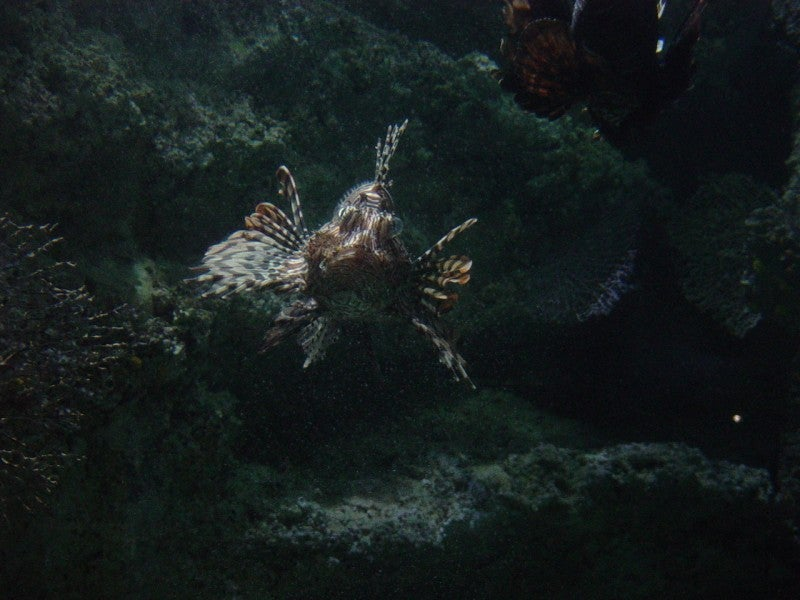 Arrecife en Sea Life Aquarium