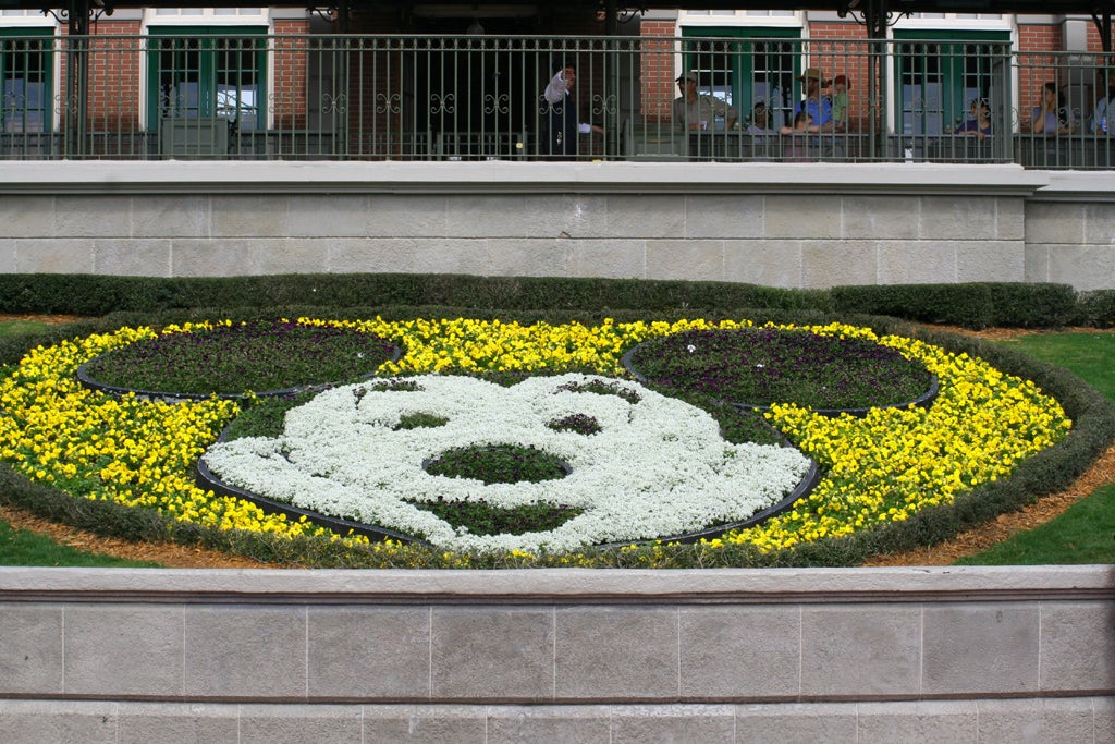 Pared en Walt Disney World