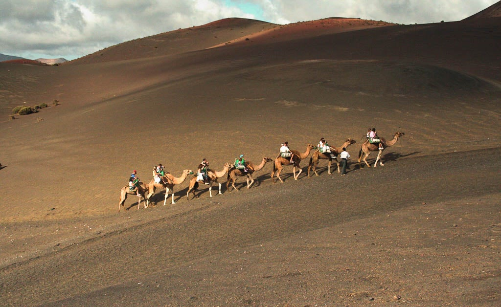 Ride Camel at Timanfaya