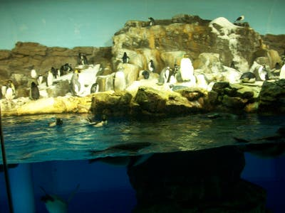 Penguin Encounter en Sea World
