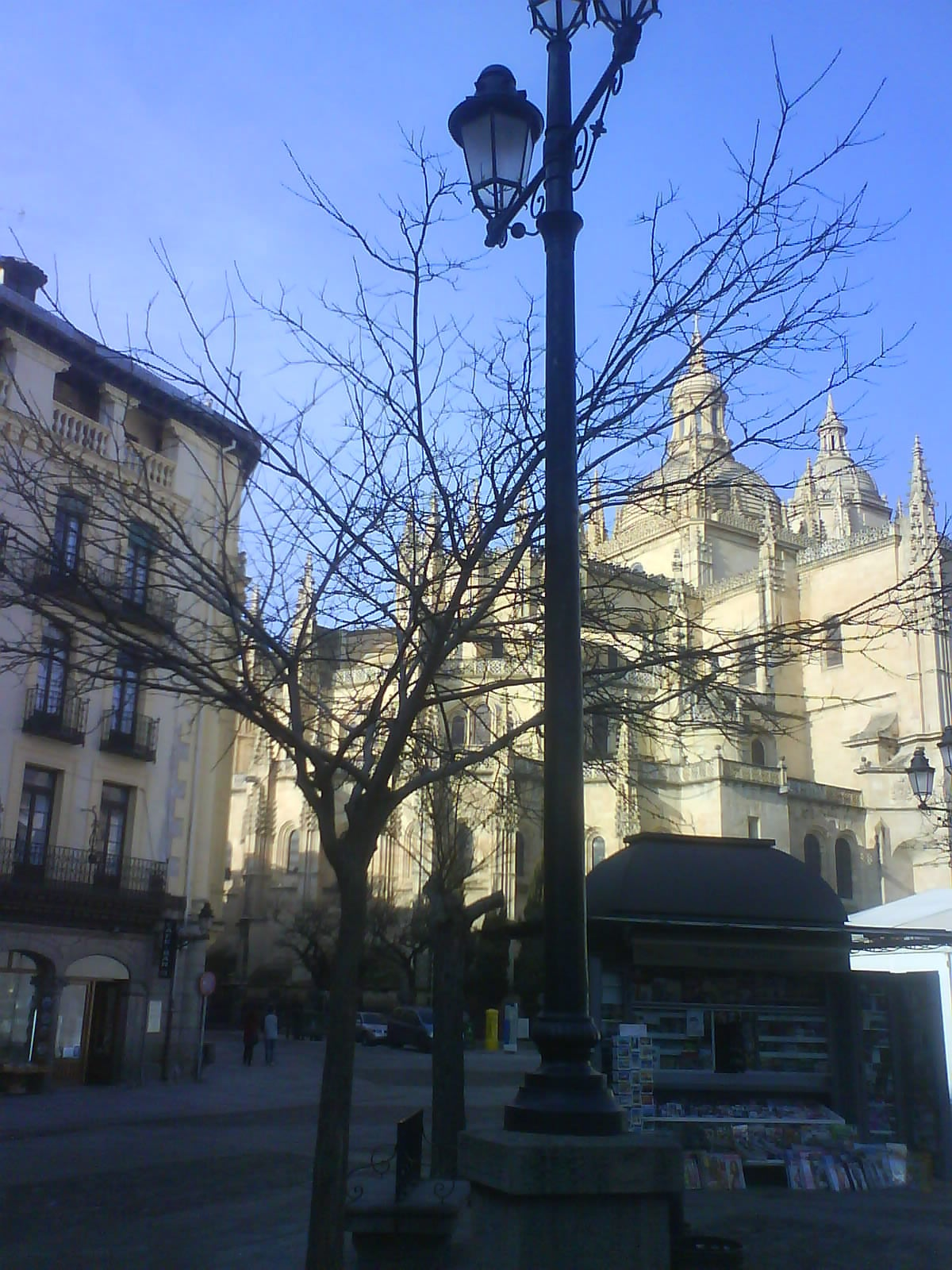 Árbol en Plaza Mayor