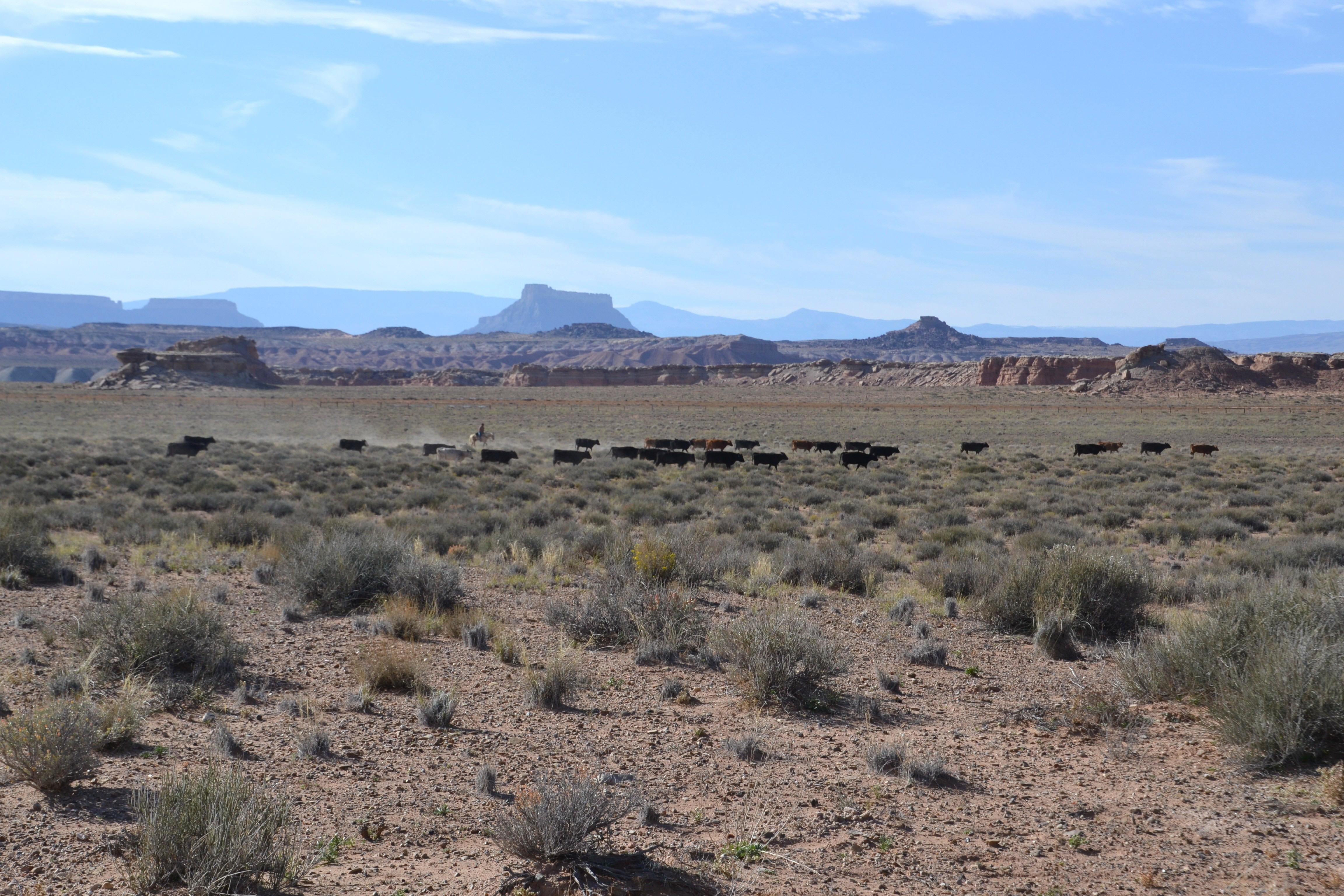 Sabana en Capitol Reef National Park