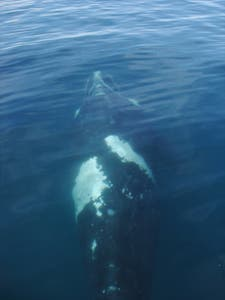 Whales in Peninsula Valdes