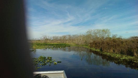 Kissimmee Swamp Tours
