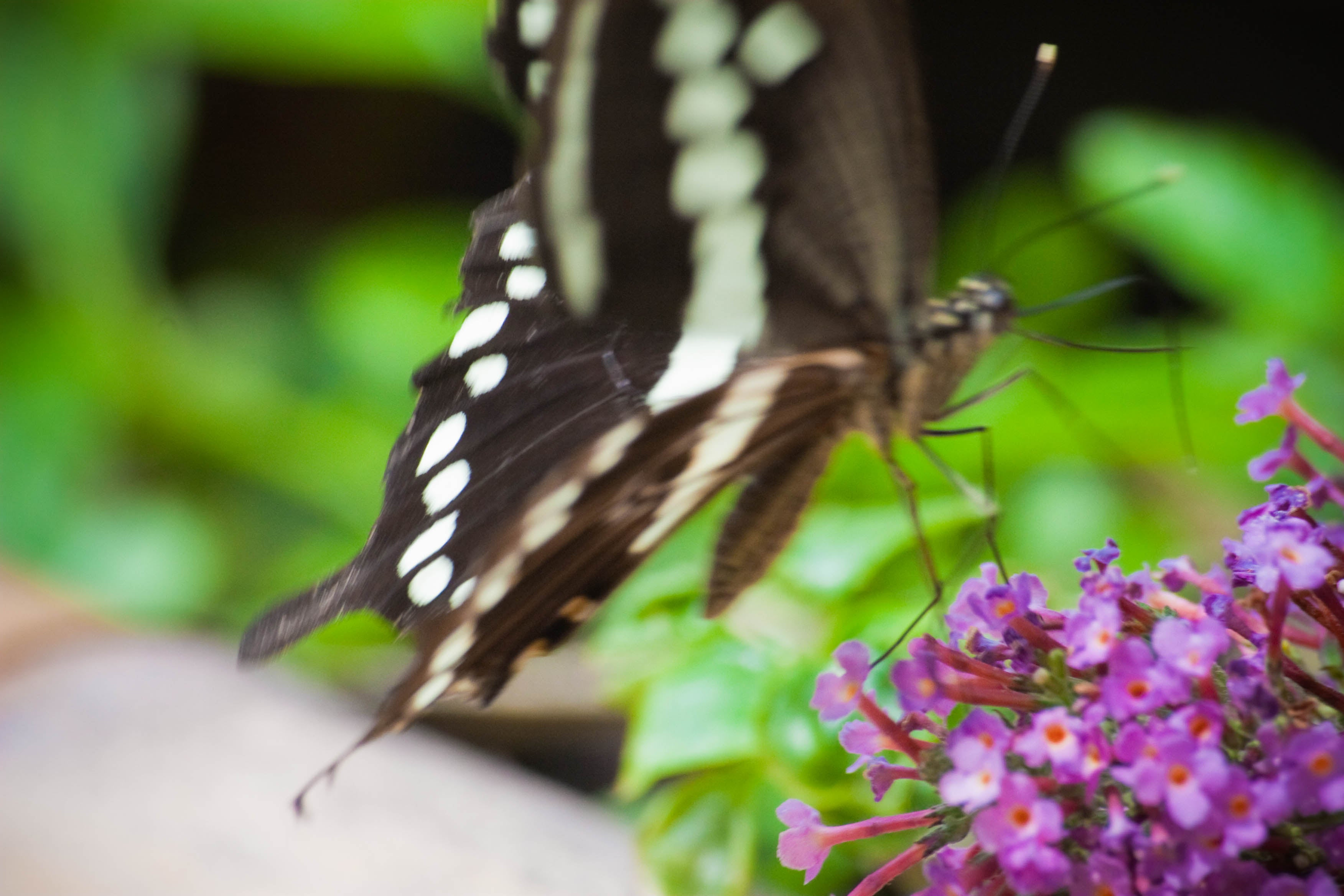 Animal en Collodi Butterfly House