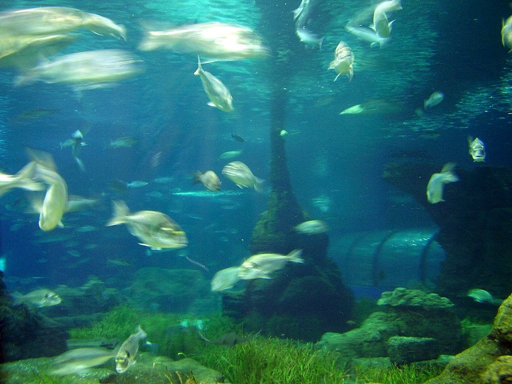 Algas Marinas en L'Aquarium de Barcelona