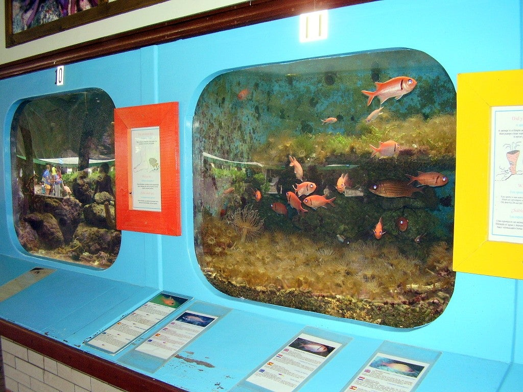 Curaçao Sea Aquarium
