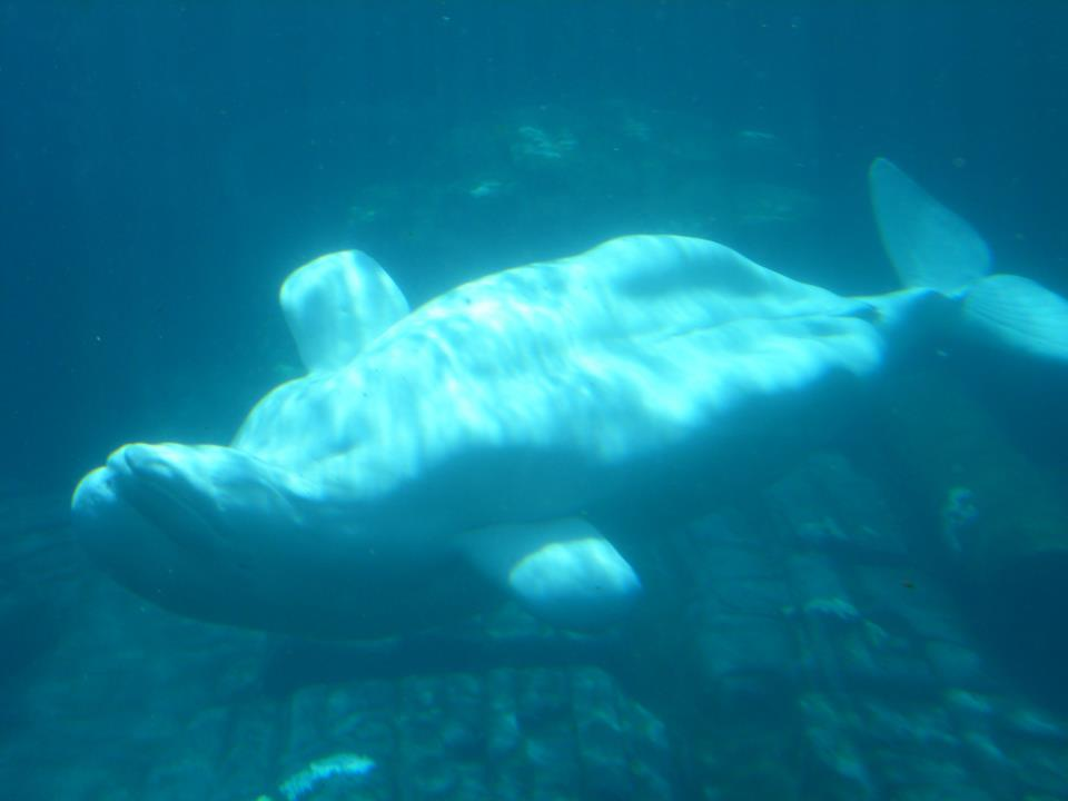 Ballena en Sea World Orlando