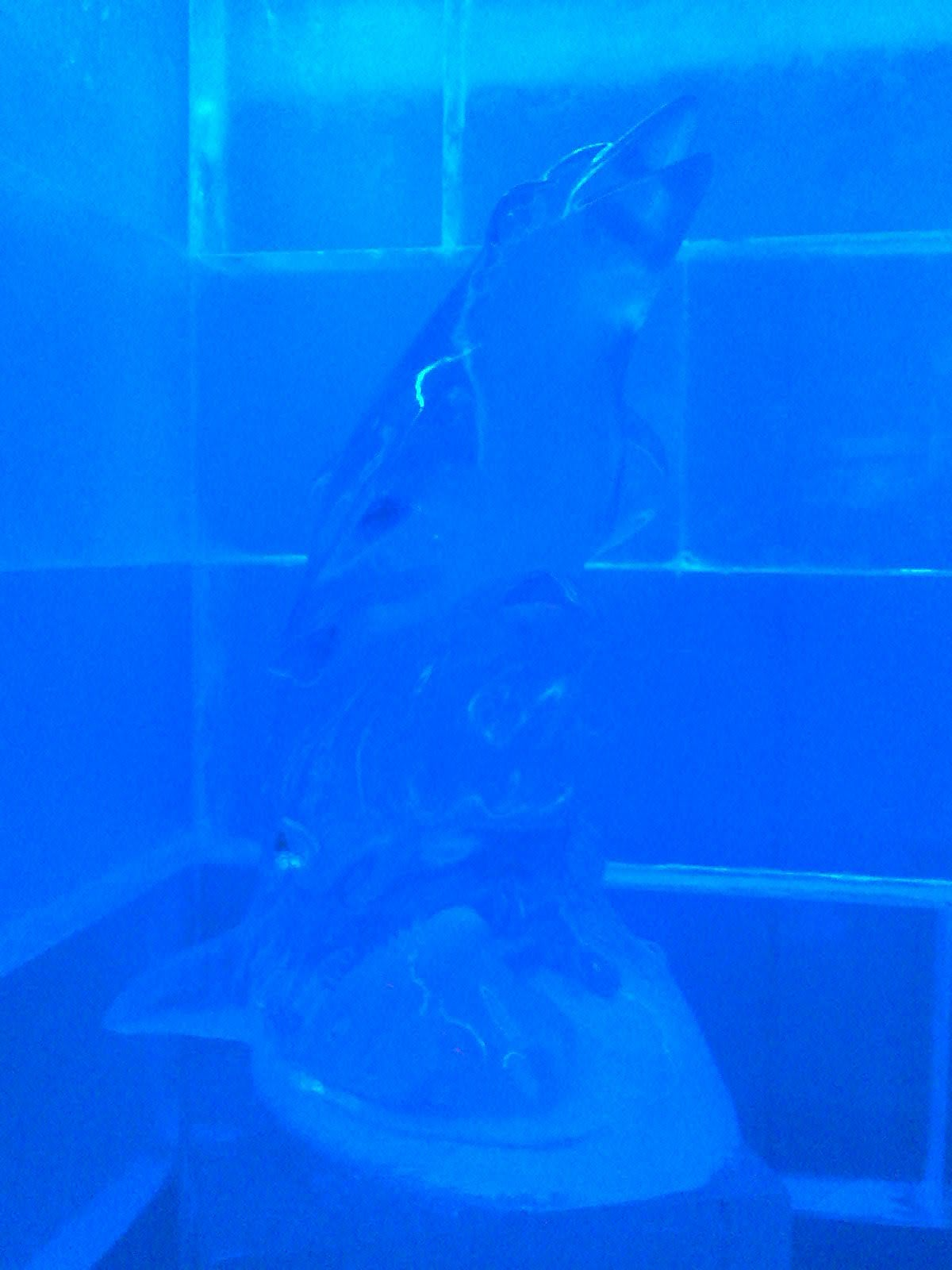 Azul en Ice Bar Madrid
