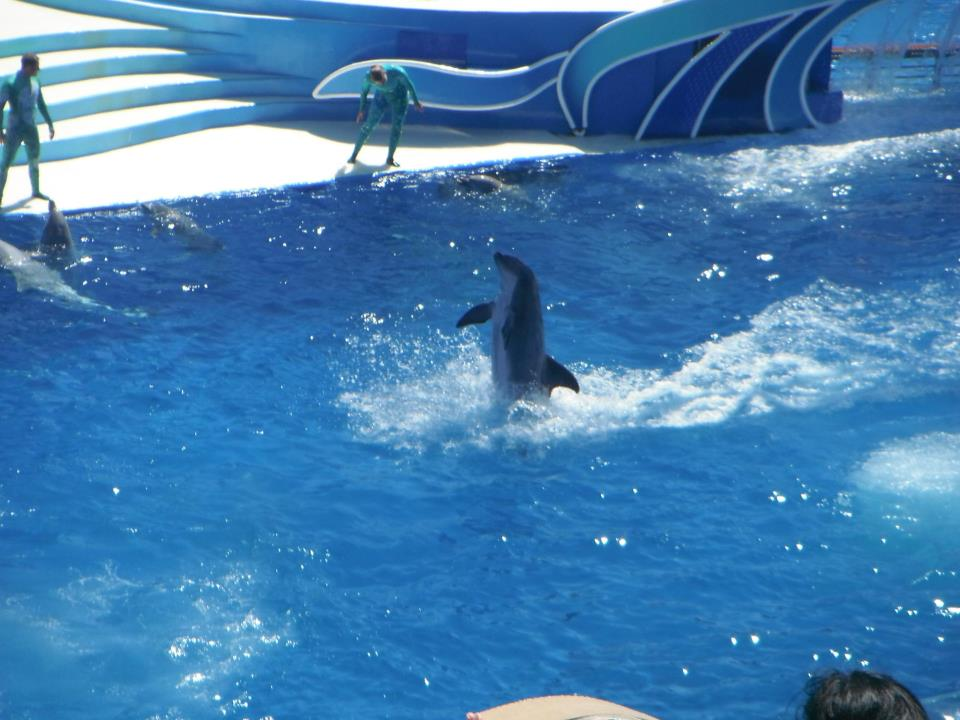 Orca en Sea World Orlando