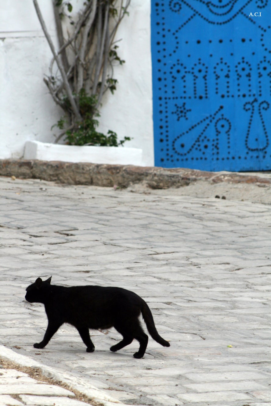 Animal en Sidi Bou Saïd