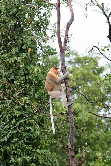 Tour Water Village and Proboscis Monkey