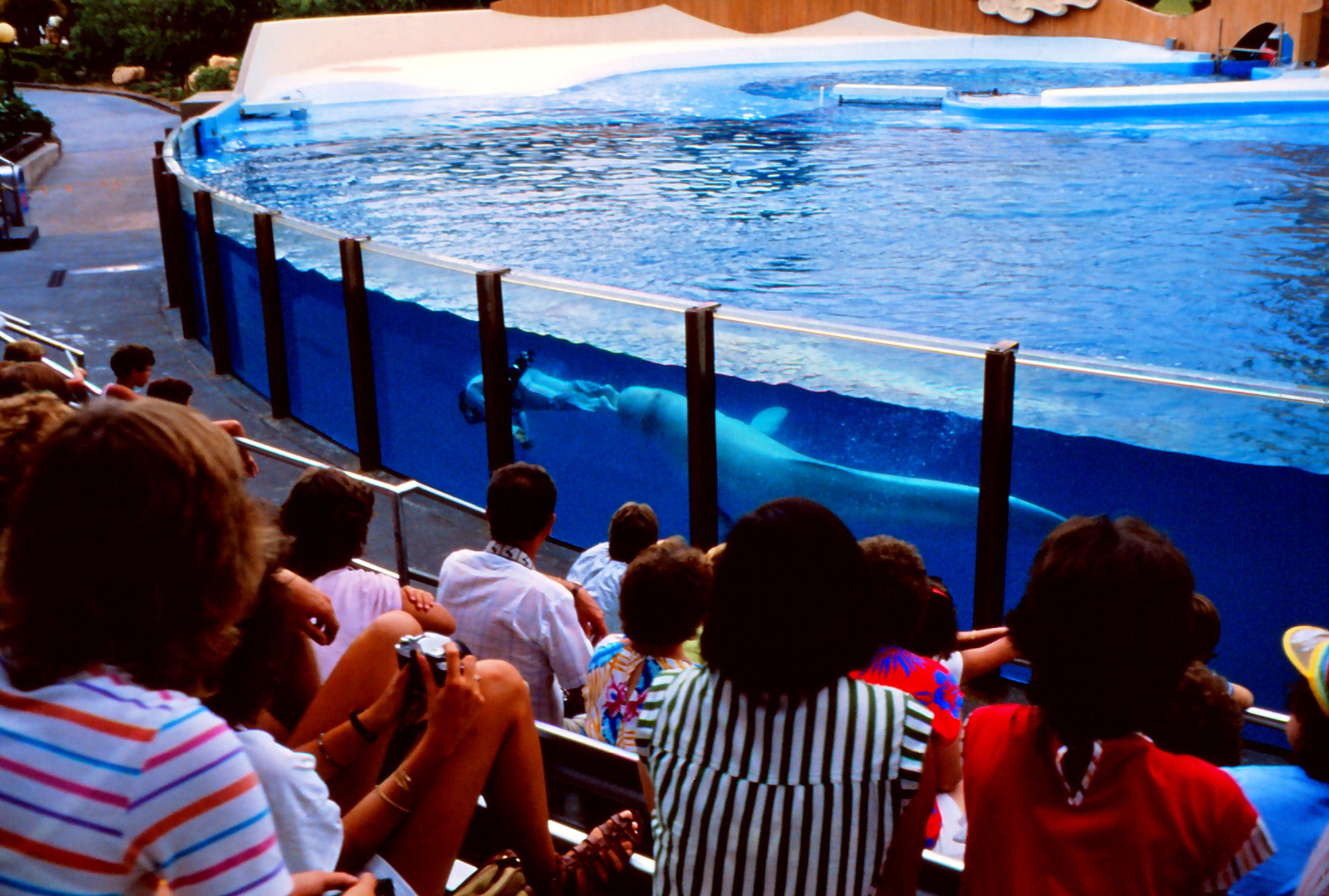 Barca en Sea World Orlando