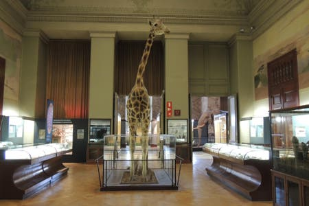Royal Museum for Central Africa (RMCA)