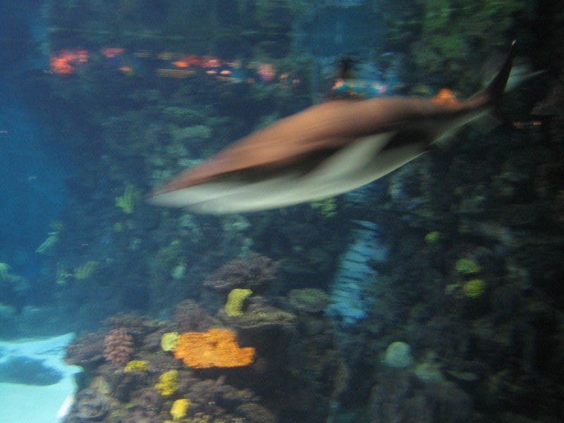 Mar en L'Aquarium de Barcelona