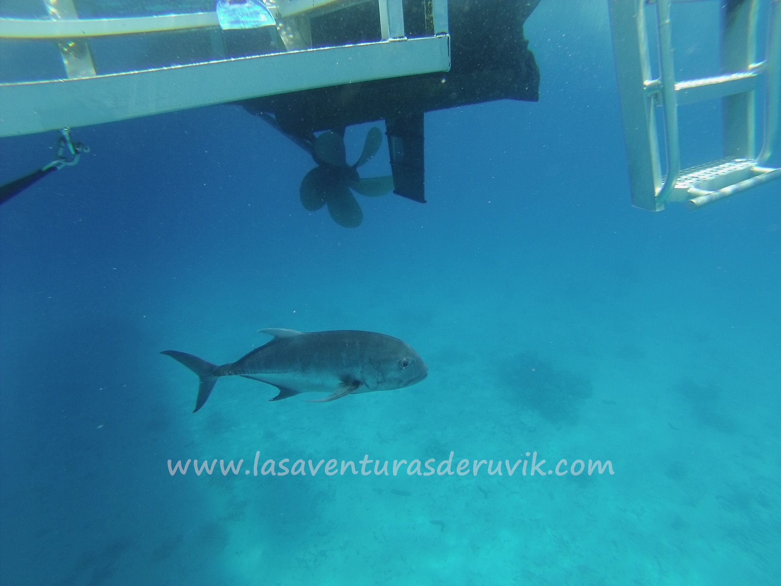 Silverswift - Cairns Dive & Snorkel Trips