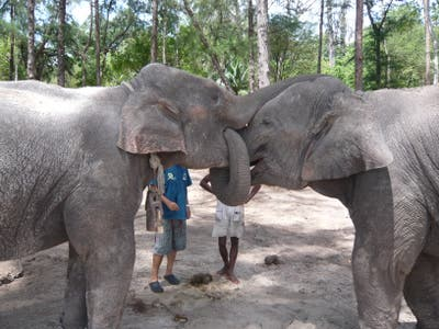 Elephant Training Camp