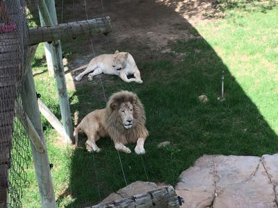 Cango Wildlife Ranch