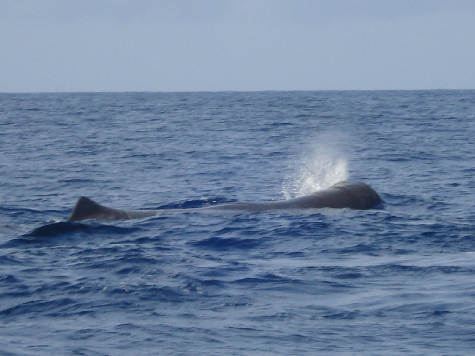 Whale Watching Tours - Observacao de Cetaceos