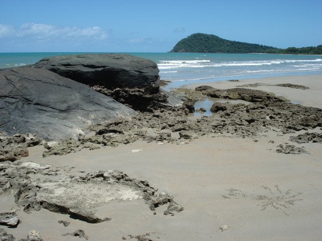 Cala en Cape Tribulation