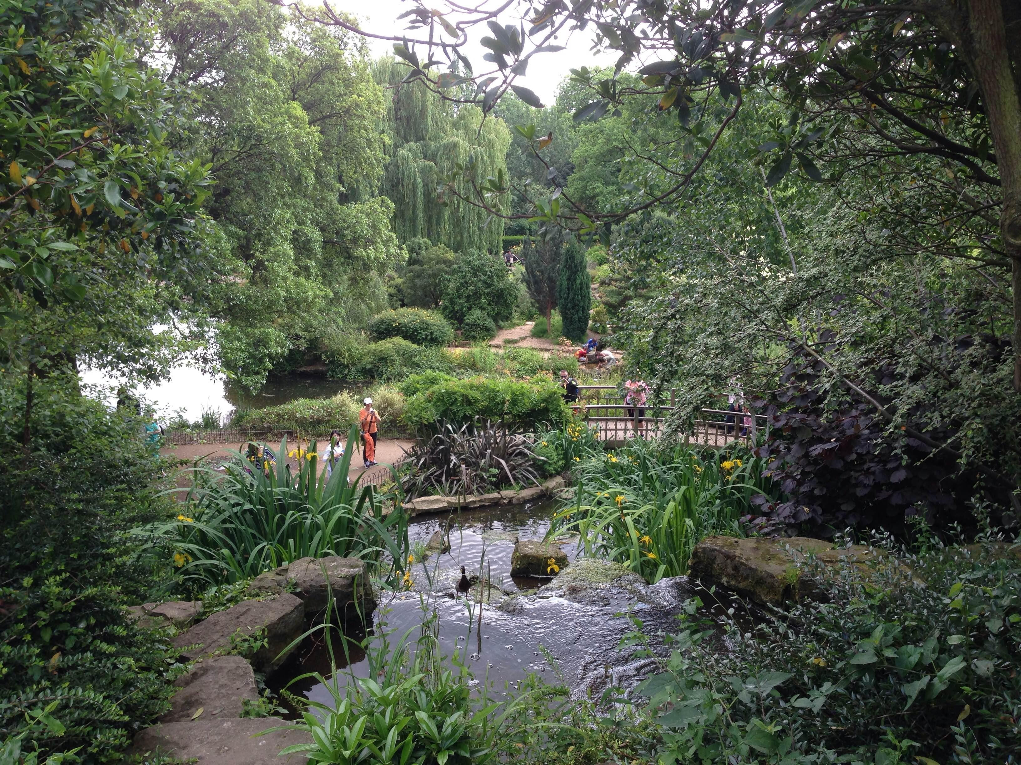 Selva en Queen Mary's Gardens