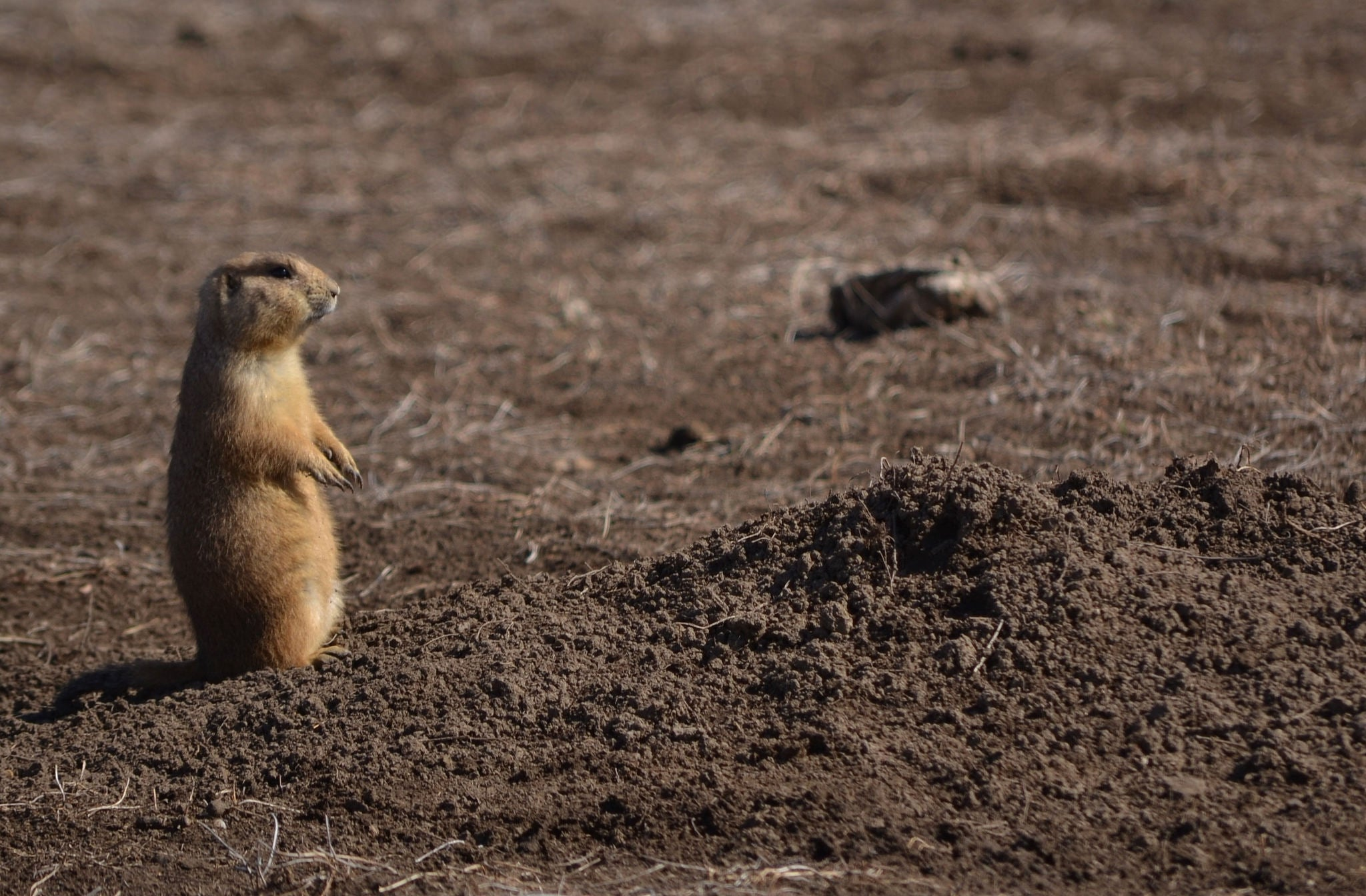 Robert's Prairie Dog Town